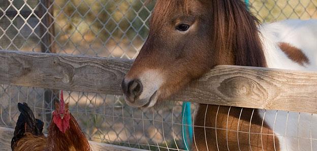 Is DE harmful to animals