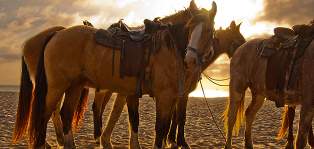 Group of Horses with Saddles on