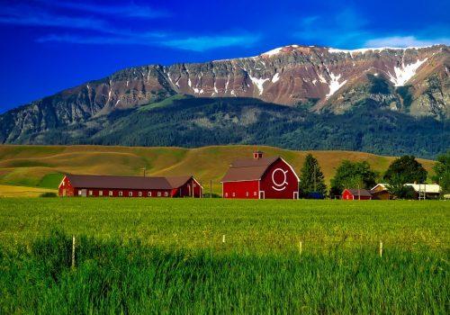 agricultural-farm