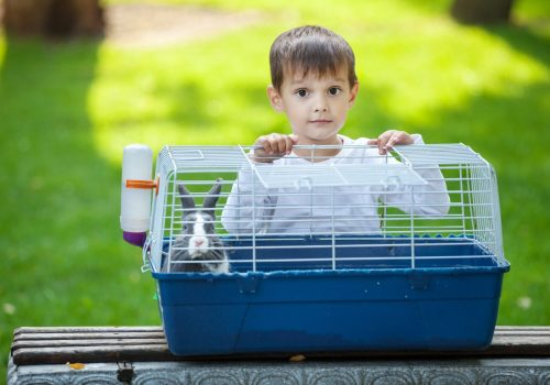 preschool-boy-opening-a-cage-with-a-pet-rabbit-in-PEWDFZU