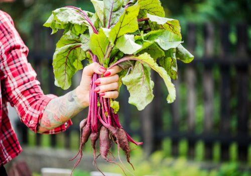 women holding fresh garden beets