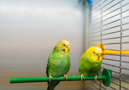 two-parrots-sitting-on-a-stick-in-pet-shop-PCHSXTQ